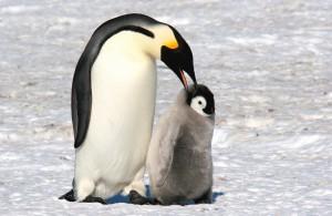 Antarctica_november_2007